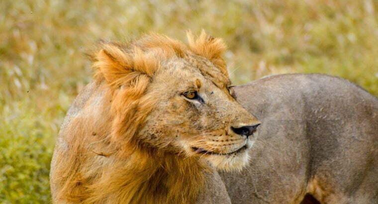 6 DAYS TANZANIA SAFARI Manyara, Tarangire,Serenget