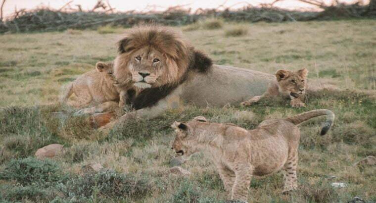 5 DAYS TANZANIA SAFARI-serengeti, Ngorongoro and l